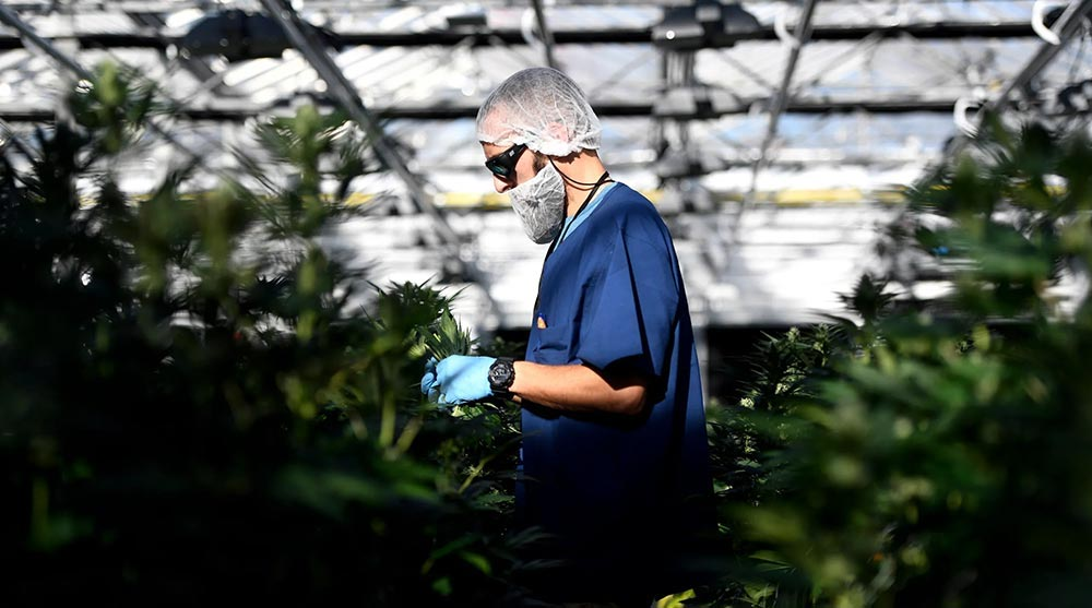 Photos: Inside a Morris County Cannabis Farm